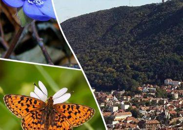 Zilele Ariei Protejate Muntele Tâmpa, Editia A III-A (2016)